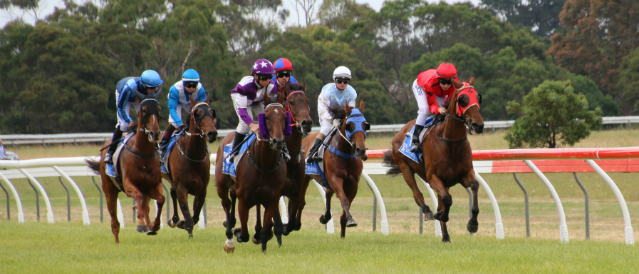 Racehorses running on the local track in an event supported by Dunkeld Community Bank Branch.